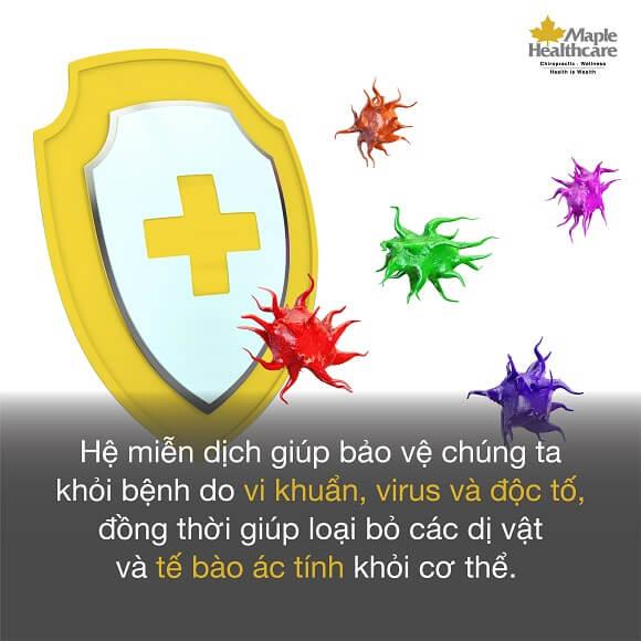 phòng ngừa cúm với maple healthcare